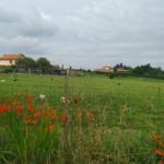 comunicado de la ADSP de Salamanca con respecto a la atención sanitaria en el mundo rural.